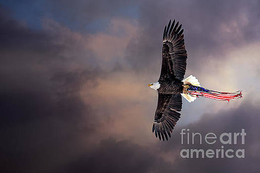 Wings of Freedom by Scott Thorp