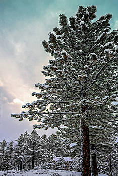 Winter Afternoon by Maria Coulson