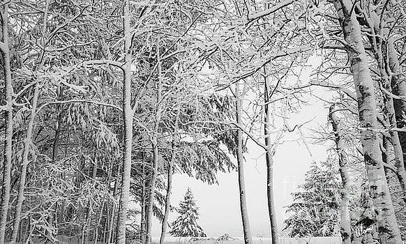 Winter by Alana Ranney
