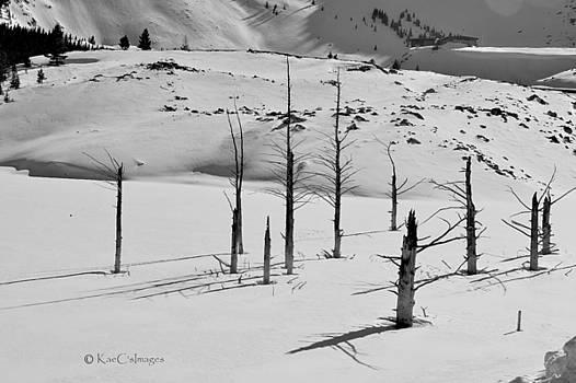 Kae Cheatham - Winter at Quake Lake