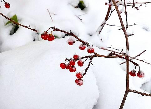 Winter berries by Inessa Williams