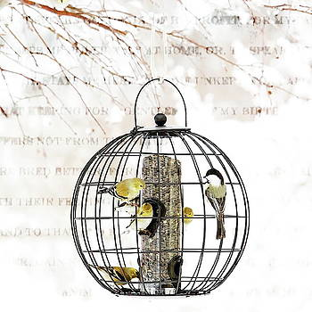 Winter Bird Feeder  by Andrea Kollo