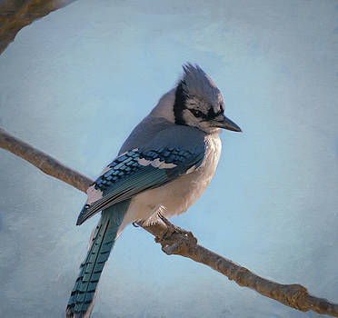 Winter Blue Jay  by Mary Lynn Giacomini