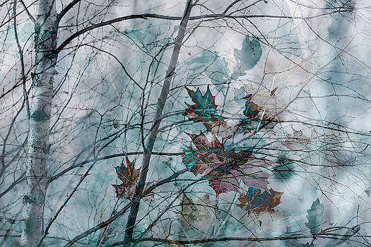 Winter Blues by Glenys Garnett