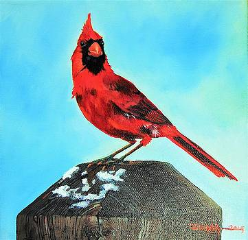 Winter Cardinal by Dana Newman