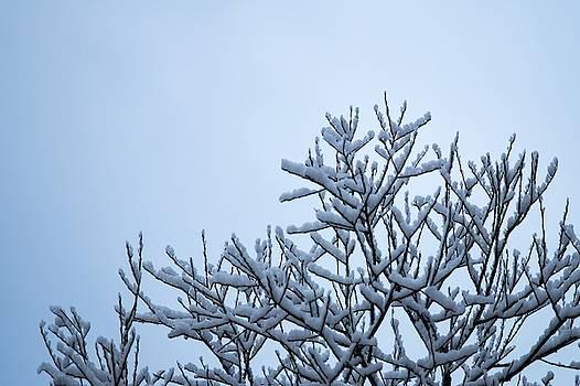 Winter Cloak by Tim Beebe