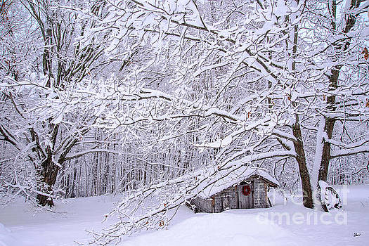 Winter Coop by Alana Ranney