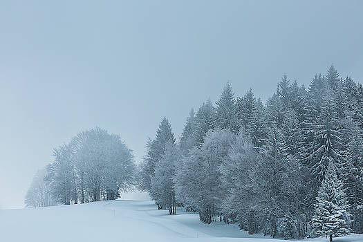 Winter dreams - 1 by Paul MAURICE