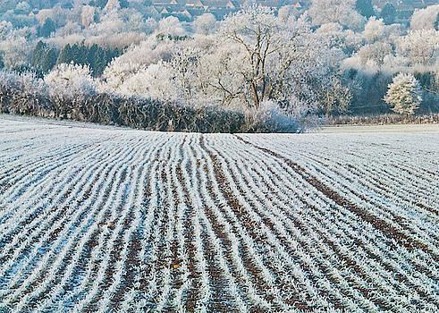 David Ross - Winter field, Little Rissington, Gloucestershire