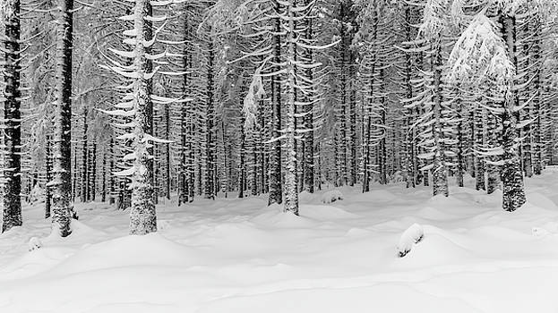 winter forest, Harz by Andreas Levi