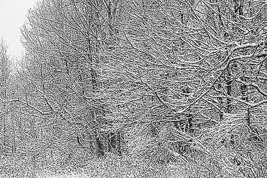 Dawn J Benko - Winter Gap