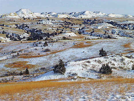 Winter Grasslands by Cris Fulton