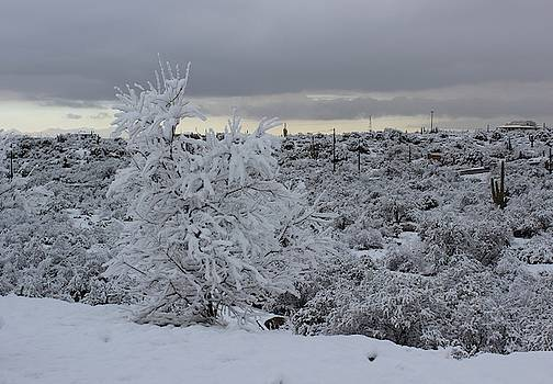 Winter in Arizona No.3 by Kume Bryant