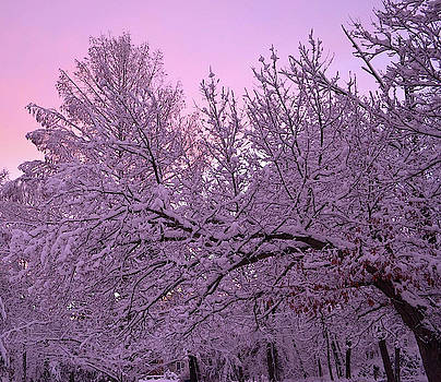 Winter in New England by Leslie Carbone