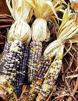Sharon Williams Eng - Winter Indian Corn
