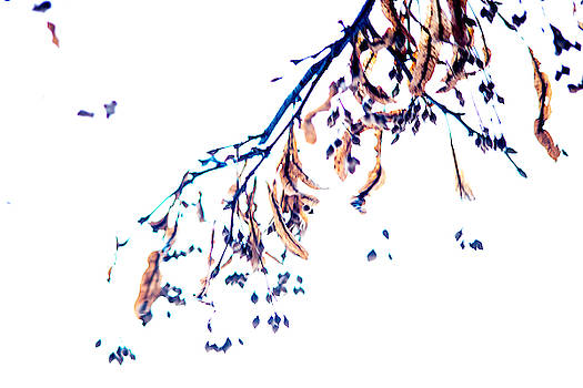 Winter Leaves Abstract by Tim Beebe