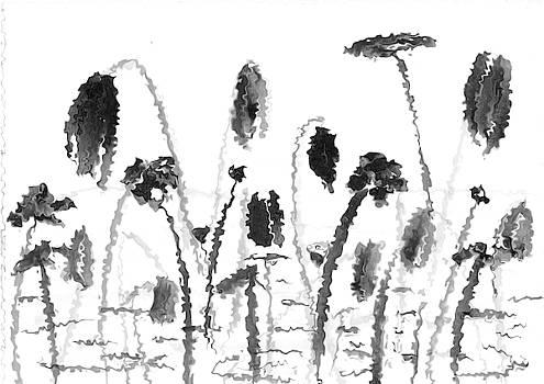 Winter lotuses by Steve Clarke
