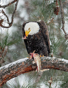 Winter Meal by Mike Dawson