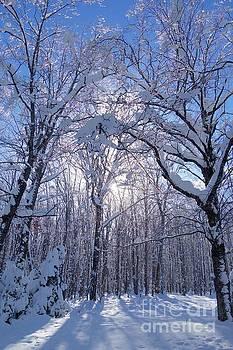 Winter Morning Beauty by Sandra Updyke