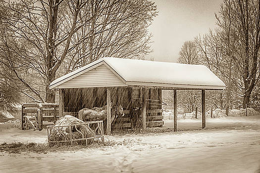 Winter on the Farm by Eleanor Bortnick