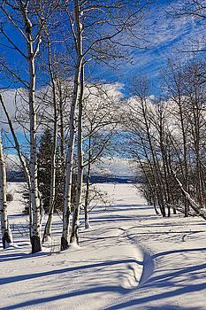 Winter Peace by Tom Gresham