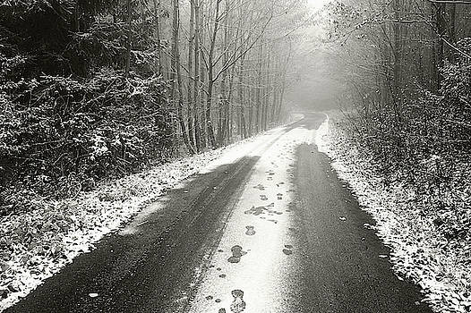 Winter Road Through Misty Woods by Jenny Rainbow