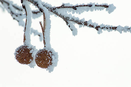 Winter Simplicity by Annette Persinger
