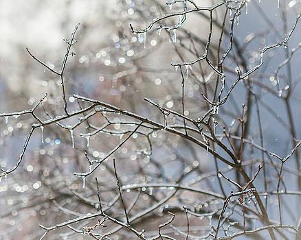 Winter Sparkle 3 by Susan Schmidt