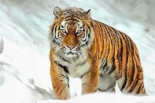 Winter Tiger by Harry Warrick