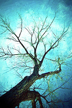 Winter Tree Blue  by James BO Insogna