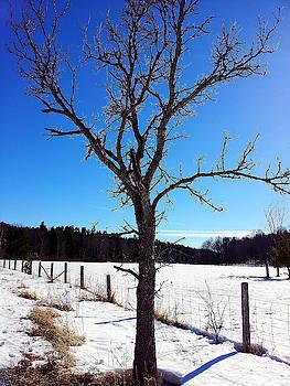 Winter Tree Blue by Susan Janus