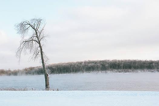 Winter Tree by Bruce Davis