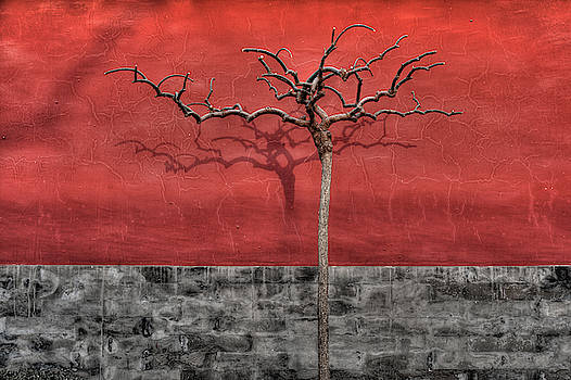 Winter Tree in Beijing by Ian Robert Knight