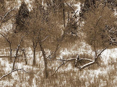 Winter Tree Reverie by Cris Fulton