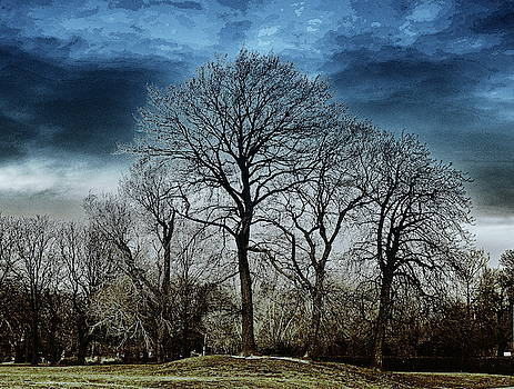 Winter Trees And Dark Skies by Jeff Townsend