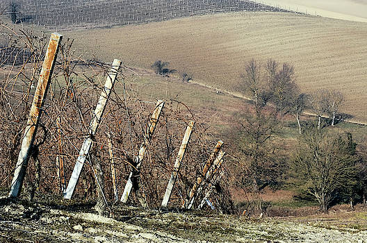 Winter vineyards 1 by Guido Strambio