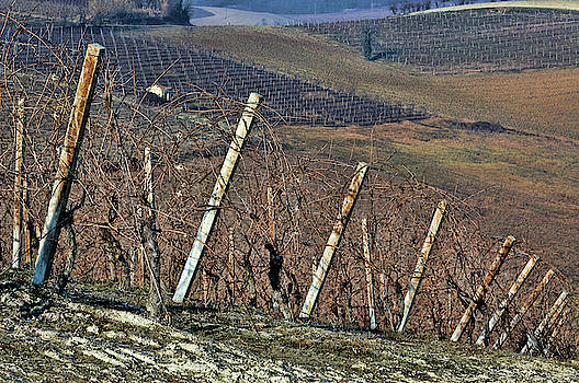 Winter vineyards 2 by Guido Strambio