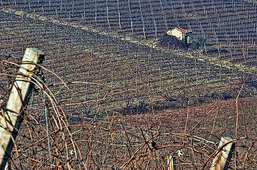 Winter vineyards 3 by Guido Strambio