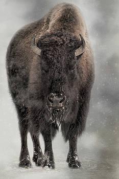 Winter Warrior by Kelley Parker