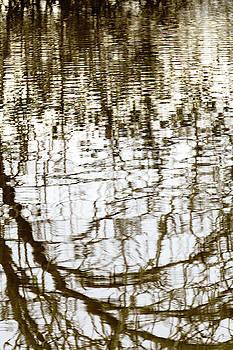 Winter Water Reflection - 19-5012  by Tari Kerss