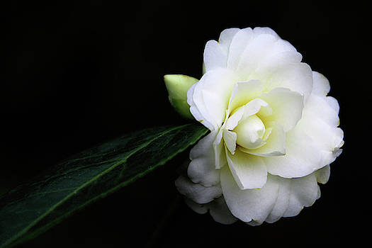 Winter White by Debra Orlean