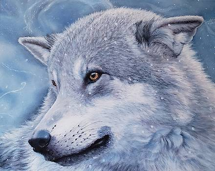 Winter wolf by Terry Berg