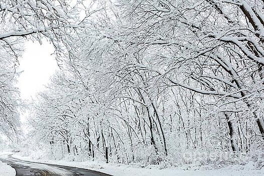 Winter Wonderland by Terri Morris