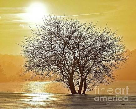 Cindy Treger - Winter Wonderland Tree