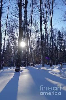 Winter Woods Walk by Sandra Updyke