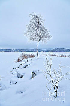 Winterland 10 by Veikko Suikkanen
