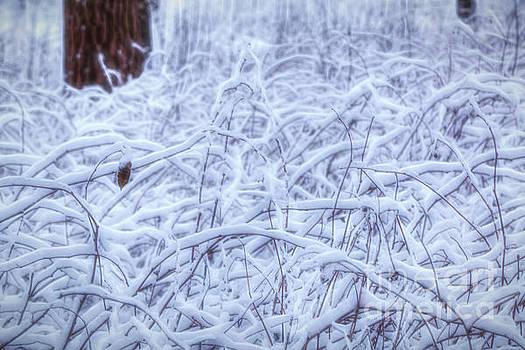 Winterland 5 by Veikko Suikkanen