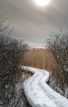 Winters Path by Scott Thorp