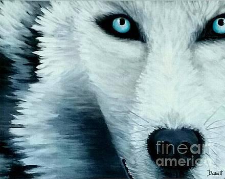 Wolf Eye by Danett Britt