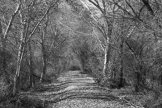 Wooded Path Black and White by Allan Van Gasbeck